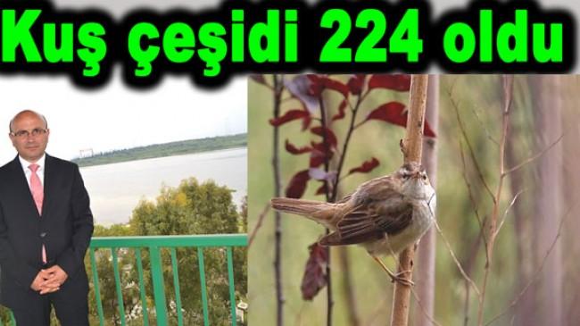 Hersek Lagününde 224 kuş oldu